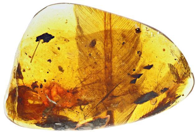 亿年前凶猛古鸟类被发现  袖珍猛禽复原图曝光