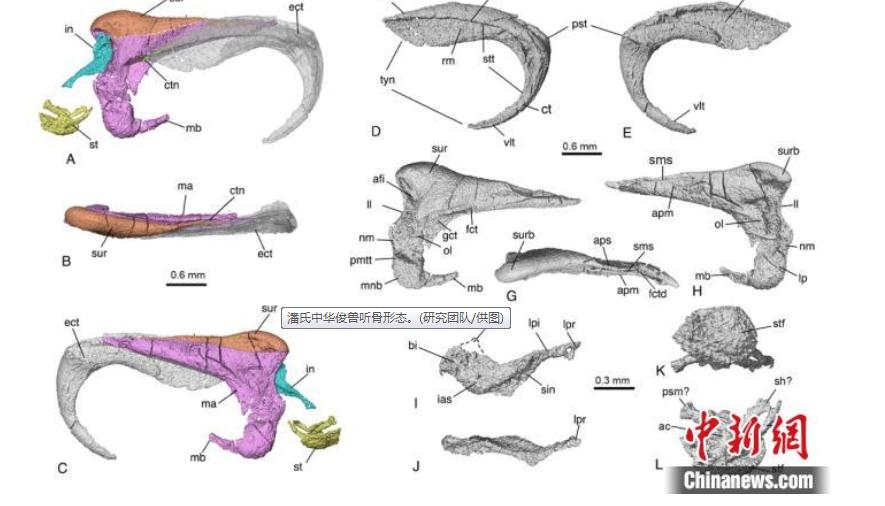 哺乳動物中耳如何演化?科學家研究有發現